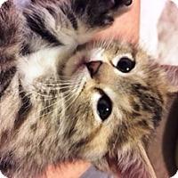 Adopt A Pet :: Aurora - St. Louis, MO