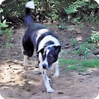 Border Collie Mix Dog for adoption in Charleston, South Carolina - Lily