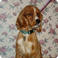 Adopt A Pet :: Ruby - Sugarland, TX