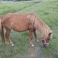 Adopt A Pet :: Annabelle - Baton Rouge, LA