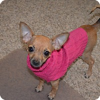 Adopt A Pet :: Flower - Yuba City, CA