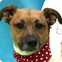 Adopt A Pet :: Sammy - Evansville, IN