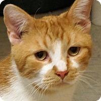 Adopt A Pet :: Blitzen - Sprakers, NY