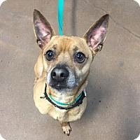 Adopt A Pet :: Mr. Mighty - Chico, CA