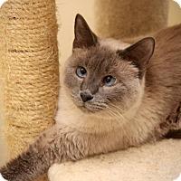 Adopt A Pet :: Connor - San Antonio, TX