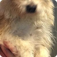 Adopt A Pet :: Finn - Boulder, CO