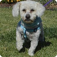 Adopt A Pet :: Calvin - Corona, CA