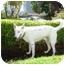 Photo 2 - Australian Shepherd Mix Puppy for adoption in Mesa, Arizona - Mark