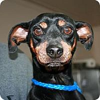 Adopt A Pet :: Benny - Canoga Park, CA