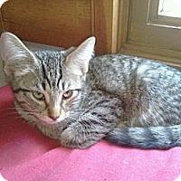 Adopt A Pet :: Scorpio - Grand Rapids, MI