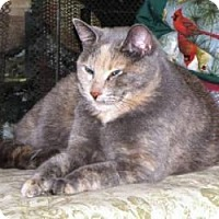 Adopt A Pet :: Possum - Milwaukee, WI