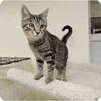 Adopt A Pet :: Bella - Milwaukee, WI