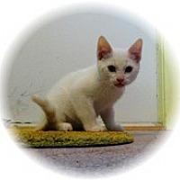 Adopt A Pet :: Vinny - Shelton, WA
