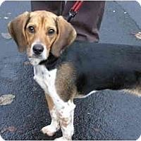 Adopt A Pet :: Franklin - Portland, OR