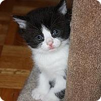 Adopt A Pet :: Pucci - Montreal, QC