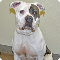 Adopt A Pet :: Betty Boo - Port Washington, NY