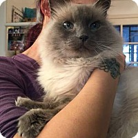 Adopt A Pet :: Katherine - Davis, CA
