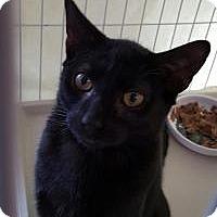 Adopt A Pet :: Shaun - Raritan, NJ