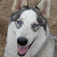 Adopt A Pet :: Marlon Brando - Raleigh, NC