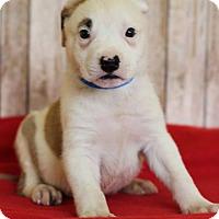 Adopt A Pet :: Zeke - Waldorf, MD