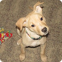 Adopt A Pet :: Taffy - Grand Rapids, MI