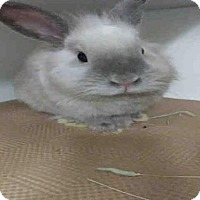 Adopt A Pet :: CODY - Brooklyn, NY
