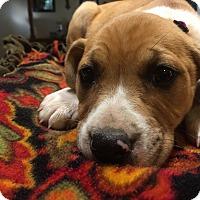Adopt A Pet :: Francesca - Boerne, TX