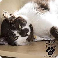 Adopt A Pet :: Cocoa - Kalamazoo, MI