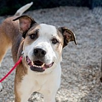 Adopt A Pet :: Oakley - Asheville, NC