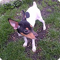 Adopt A Pet :: Bailey - Glenview, IL