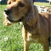 Adopt A Pet :: Chandler - Sugarland, TX