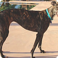 Adopt A Pet :: Megan - Tucson, AZ