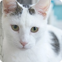 Adopt A Pet :: Backes - St Louis, MO