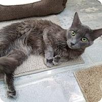 Adopt A Pet :: Ohana - McHenry, IL
