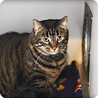 Adopt A Pet :: Rudy - Lincoln, NE