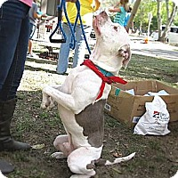 Adopt A Pet :: Beau - Chattanooga, TN