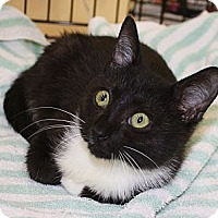 Adopt A Pet :: Sonic - Vero Beach, FL