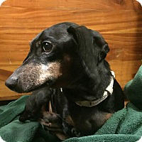 Adopt A Pet :: SUE BETH - Georgetown, KY