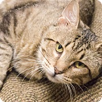 Adopt A Pet :: Darcy - Chicago, IL