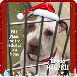 Pointer/American Pit Bull Terrier Mix Dog for adoption in San Bernardino, California - FINAL HOURS! MORENO VALLEY!