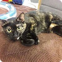 Adopt A Pet :: Lana (Nymeria) - Leonardtown, MD