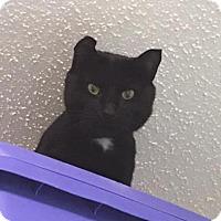 Adopt A Pet :: Steve - Cashiers, NC