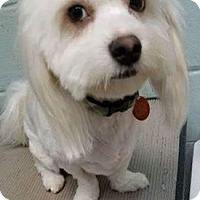 Adopt A Pet :: NINA AND NIGEL - PARSIPPANY, NJ
