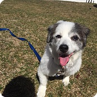 Adopt A Pet :: Missy - Perfect Companion! - Worcester, MA