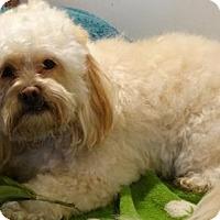 Adopt A Pet :: Mango - Vacaville, CA