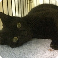 Adopt A Pet :: Brandy - East Brunswick, NJ