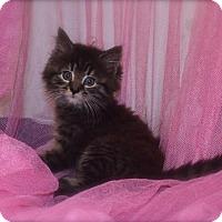 Adopt A Pet :: Angelica - Naperville, IL