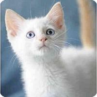 Adopt A Pet :: Peyton - Columbus, OH