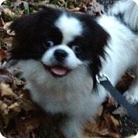 Adopt A Pet :: Chipper - Hazard, KY