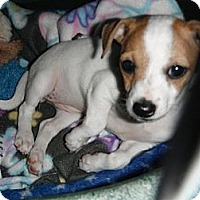 Adopt A Pet :: Mercy in Houston - Houston, TX